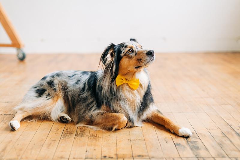 Autzen wearing a bow tie